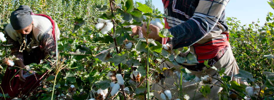 "In Kyrgyzstan (correctly called the ""Republic of Kyrgyzstan"") the cotton is also picked by hand. Since the change to certified organic cotton in 2005 the entire cotton crop of the swiss relief organisation Helvetas goes to Cotonea."